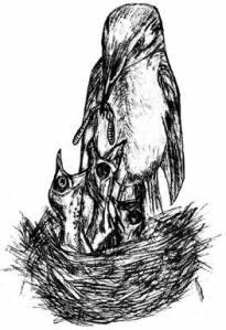 feeding-bird
